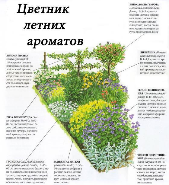 Схема цветника летних ароматов