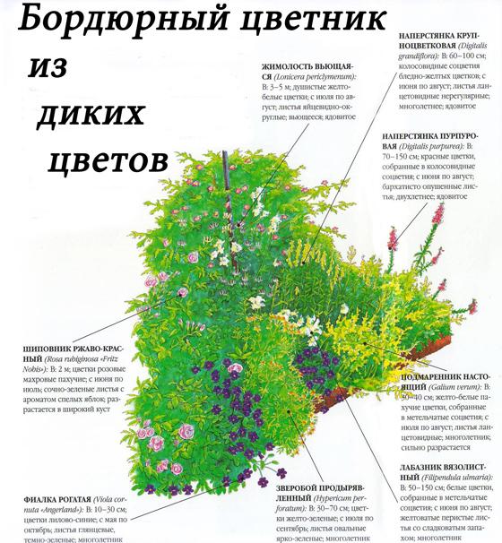 Схема бордюра из диких цветов
