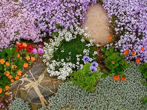 Почвопокровные растения