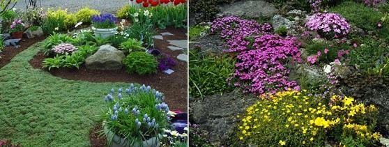 Почвопокровные растения в саду