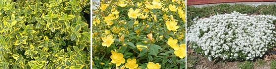 Почвопокровные растения в дизайне сада