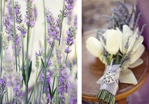 цветы лаванда фото