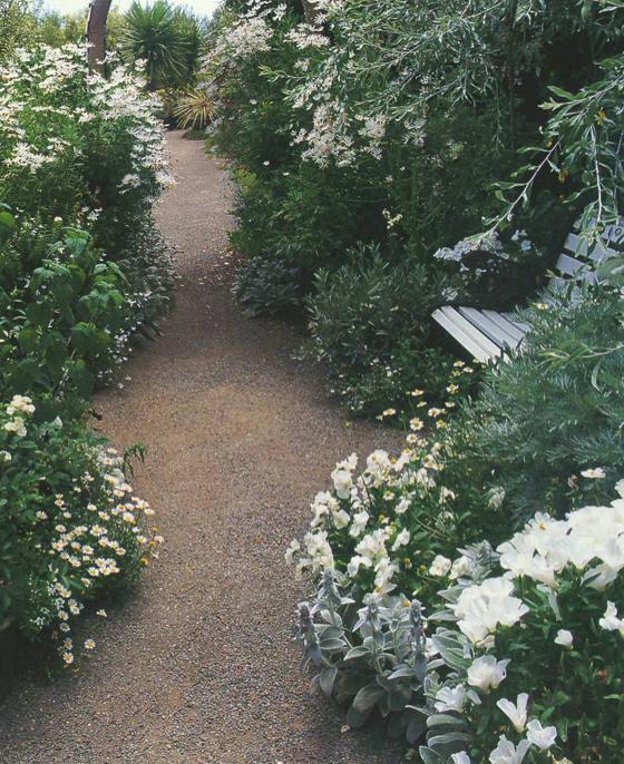 Моноцветник вдоль садовой дорожки