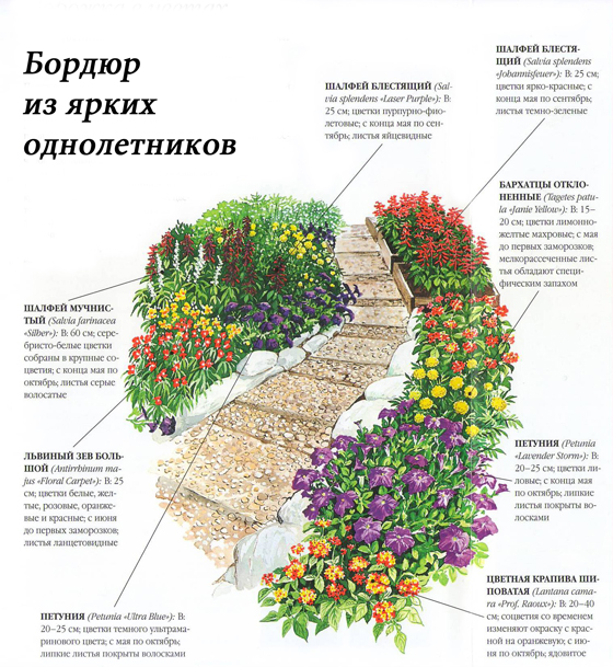 Схема цветочного бордюра