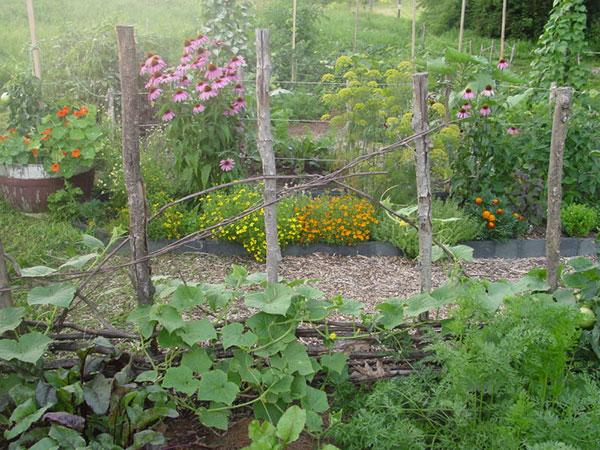 работы в саду в августе