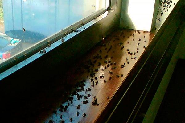 как избавить дачу от мух
