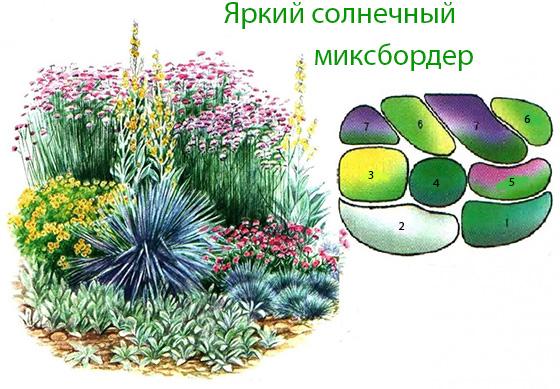 Схема миксбордера с декоративными злаками