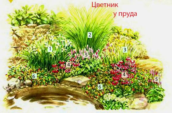цветник у пруда