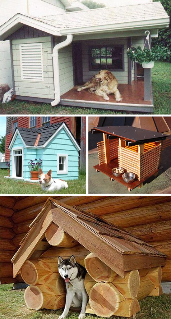 собака сидит в будке