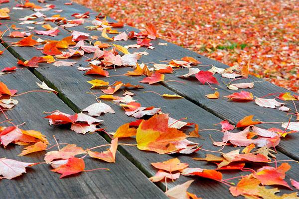 применение опавшей листвы