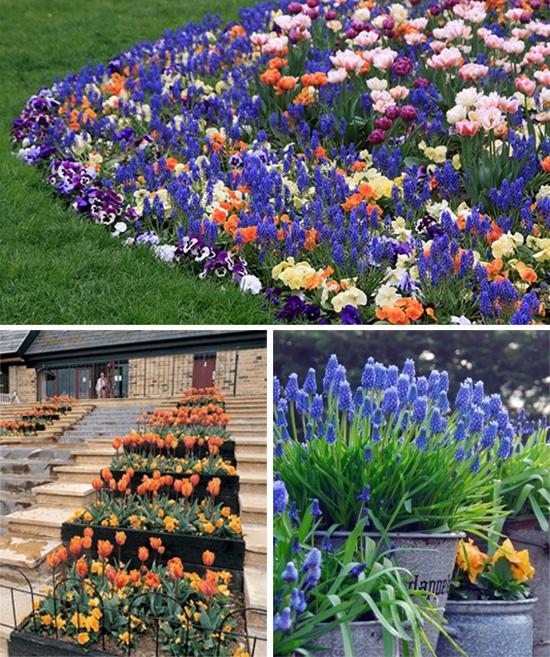 Цветение луковичных растений