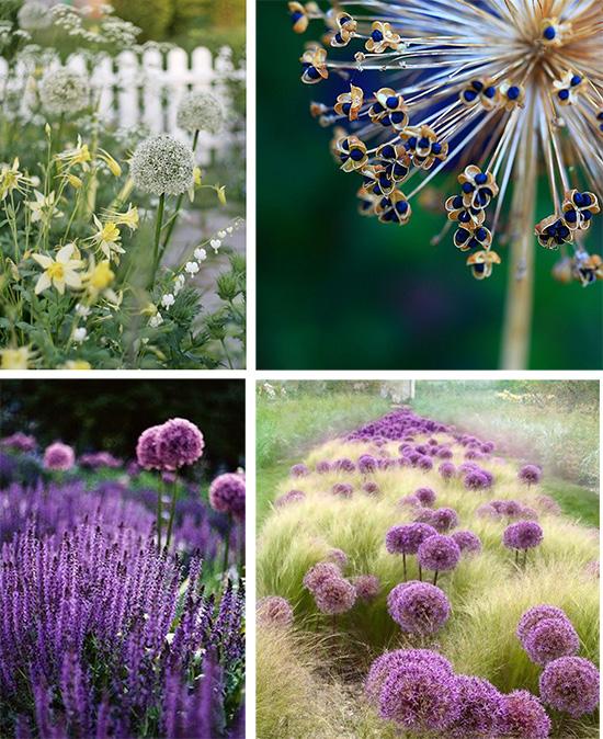 Декоративные луки в вашем саду