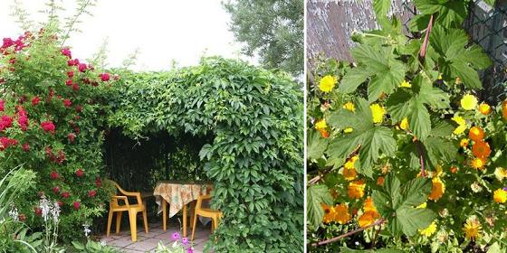 Как красиво оформить сад с помощью хмеля
