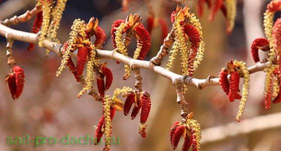 Цветет осина - пора сеять