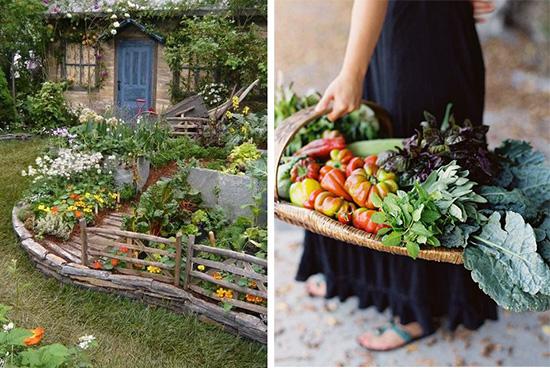 Гуминовые удобрения в саду и огороде