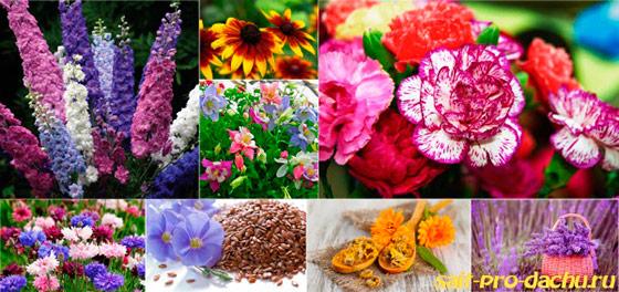 цветы которые сажают осенью название и фото