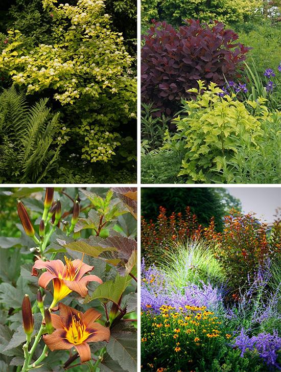 Сочетания декоративно-лиственных и цветущих растений в миксбордерах