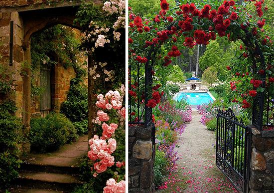 Входная зона сада в оформлении плетистых роз