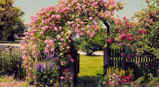 Калитка украшенная розами