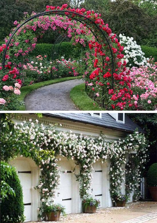 Арочные композиции из роз