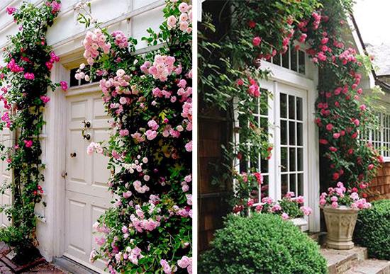 Фасады дома в обрамлении цветущих роз