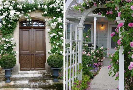 Вертикальное озеленение фасадов дома