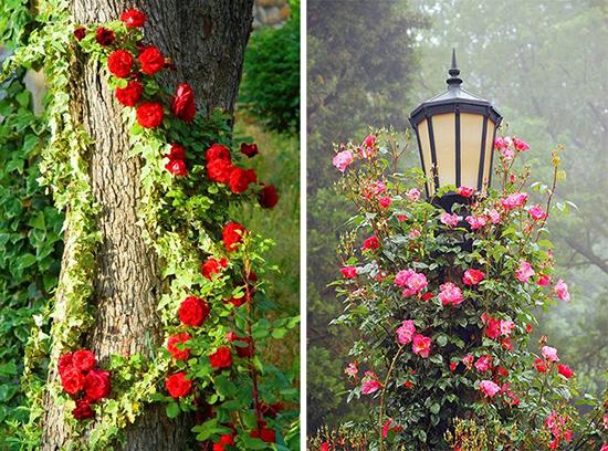 Эффектные композиции с розами