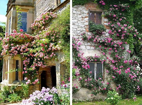 Сочетание каменной кладки и вьющихся роз