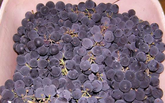 Рецепт домашнего вина из винограда кишмиш в домашних условиях 134