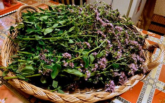 лекарственные травы для потенции Апрелевка