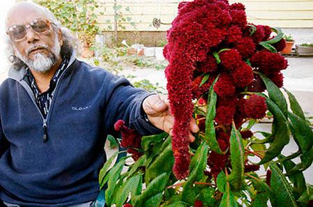 Амарант выращивание из семян