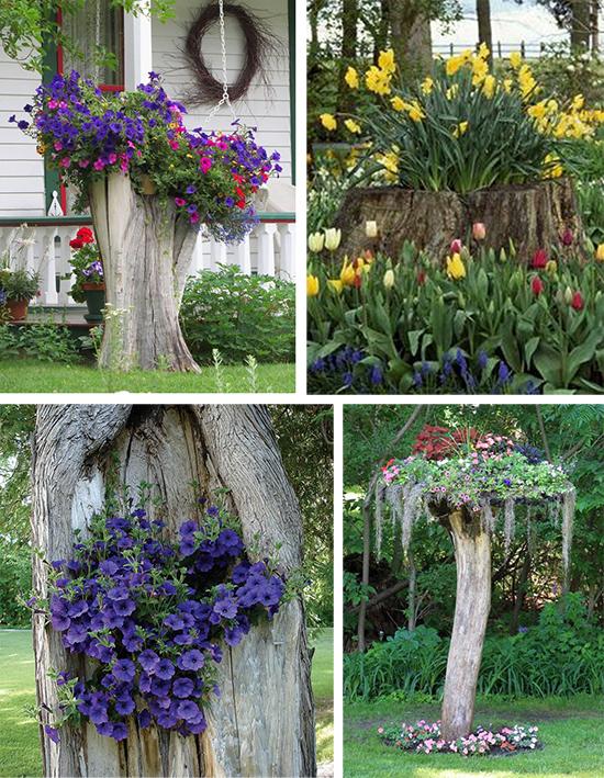 Цветущие пни и старые деревья